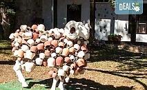 Еднодневна екскурзия до Земенски манастир и ферма Земенея с Персонал Тур! Транспорт, водач и програма с дегустация на млечни продукти