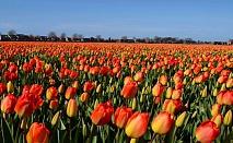 Лятно очарование в Амстердам само за 750 лева за 3 нощувки включен самолетен билет и летищни такси