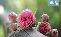 Заповядайте на ежегодния Празник на розата в Казанлък - еднодневна екскурзия с транспорт от Русе и екскурзовод