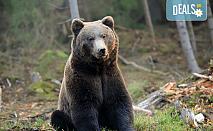 Еднодневна екскурзия на 20.04. до Белица с посещение на парка за танцуващи мечки и Добърско! Транспорт и водач от агенция Поход!