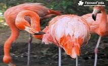 Еднодневна екскурзия до пещерата Алистрати и Керкини – езерото на пеликаните и фламингото за 33 лв.