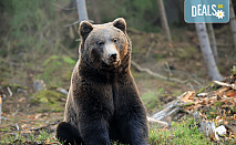 Екскурзия на 24.05. до парка за танцуващи мечки над Белица с агенция Поход! Транспорт и програма в с. Добърско