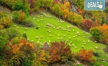 Есенна екскурзия в Родопите, с Дари Травел! 1 нощувка със закуска и вечеря в хотел 3* в Пампорово, транспорт, посещение на Ягодинската пещера и Дяволското гърло