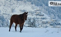 Зимни приключение в Родопите! Нощувка със закуска и вечеря + 2 часа преход с кон, по желание, от Ранчо Диви Родопи